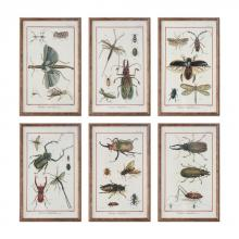 MULTI INSECTS